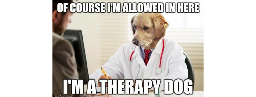 therapy-dog-lazer-cat-yearbook-entry