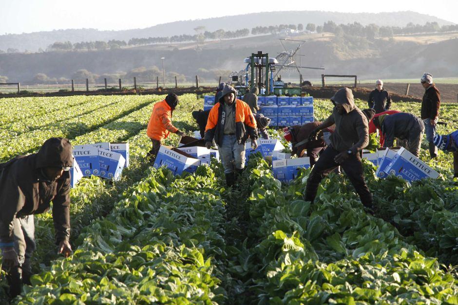 horticulture-worker-australia