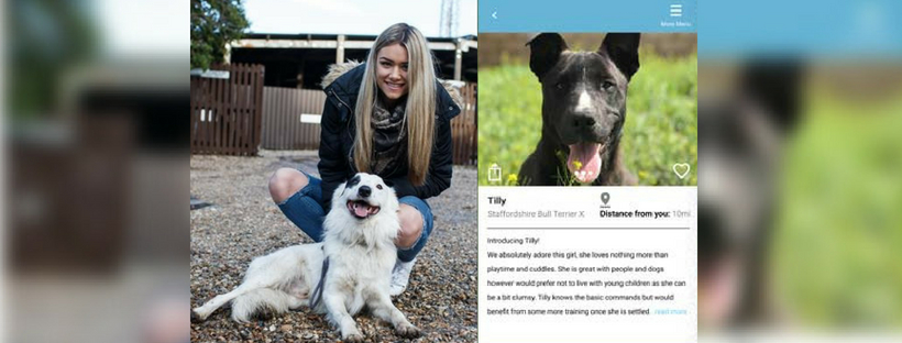 jaye-graham-tinder-stray-animals