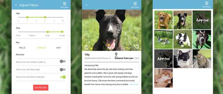 pawfect-match-stray-animals-adoption-app