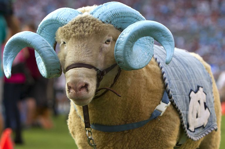 north-carolina-tar-heels-mascot-rameses.