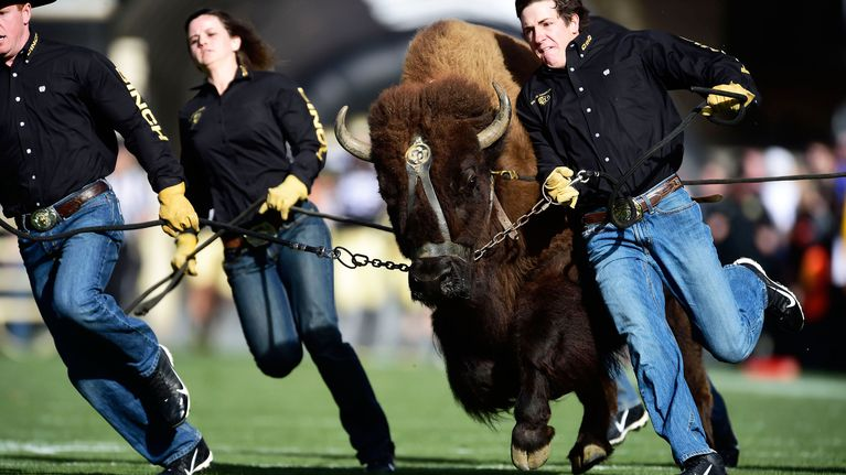 ralphie-colorado-buffaloes