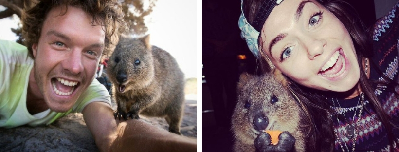 cute-student-trend-selfie-with-quokka-cover.jpg