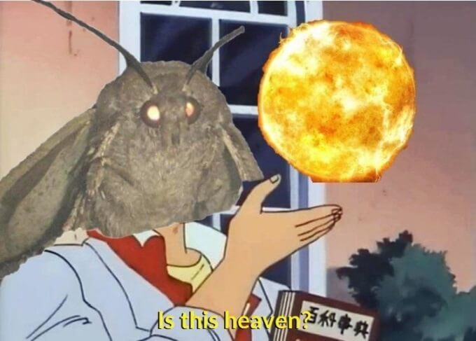 student-trends-wth-is-moth-meme-7