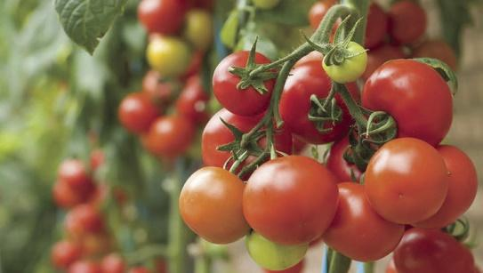 saving-money-on-food-11.jpg