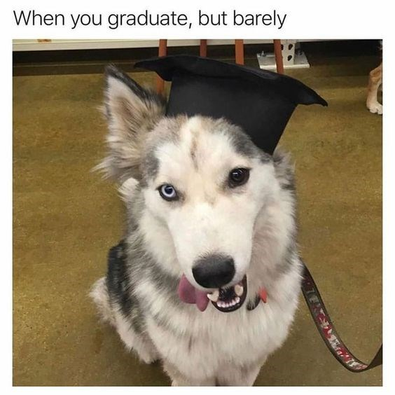 hilarious-animal-college-life-memes-05
