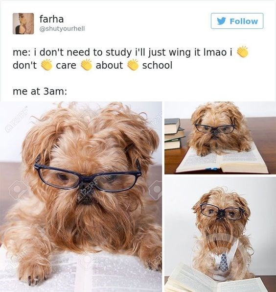 hilarious-animal-college-life-memes-06