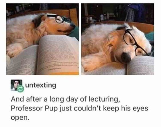 hilarious-animal-college-life-memes-07