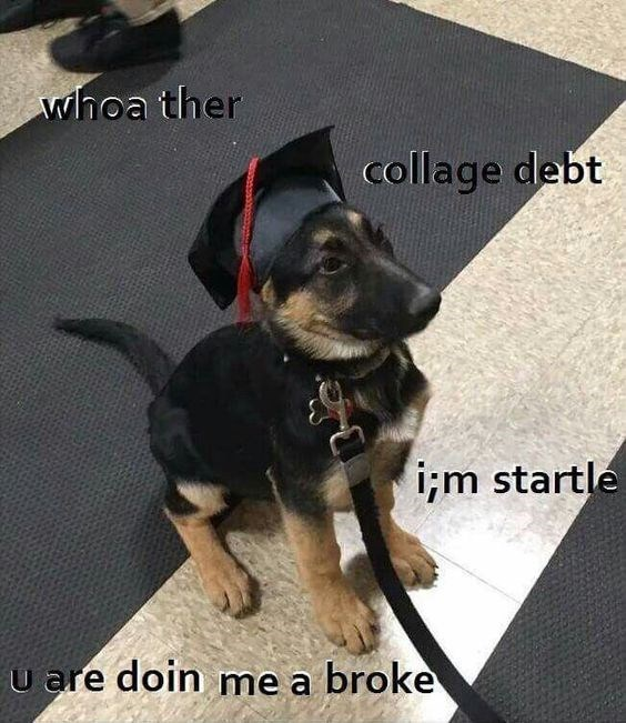 hilarious-animal-college-life-memes-10