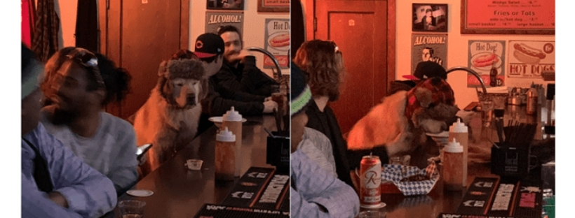 dog-chilling-in-a-bar-goes-viral-cover