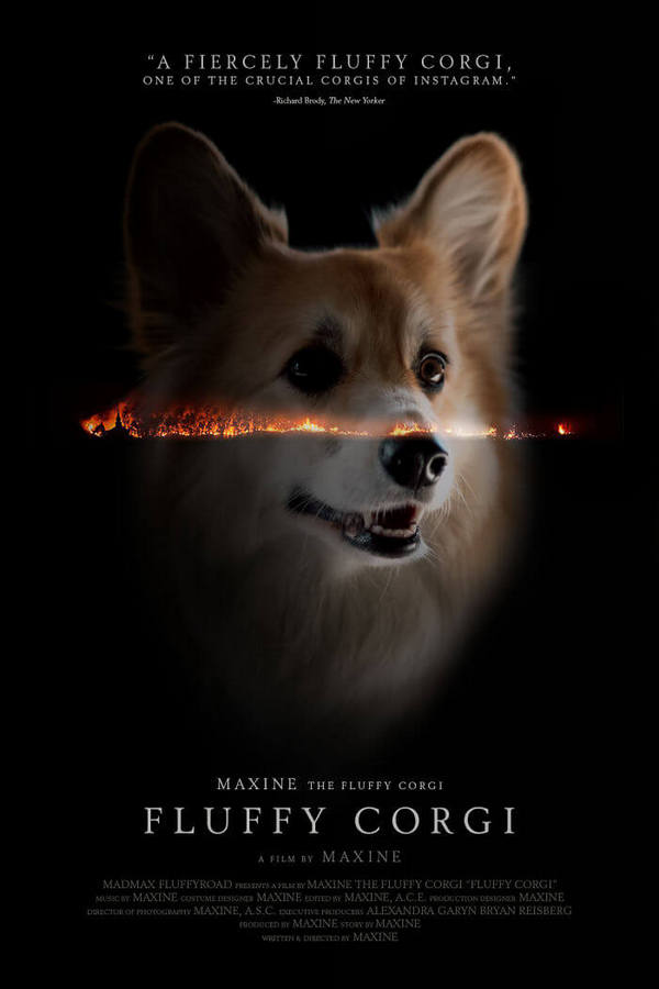 corgi-gets-photoshopped-into-movie-posters-09