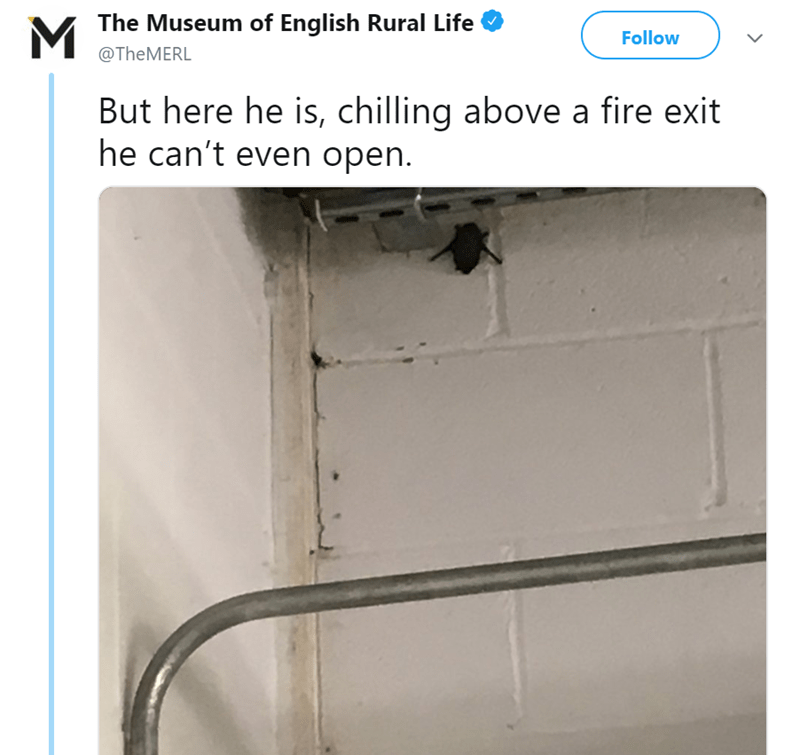 twitter-thread-bat-found-uk-library-museum-07.png