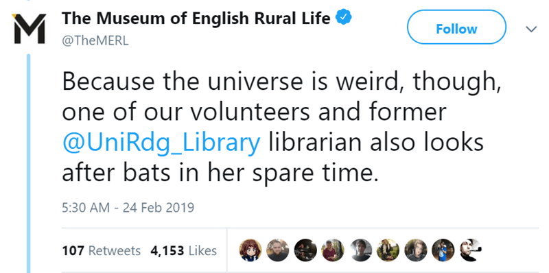 twitter-thread-bat-found-uk-library-museum-11.png