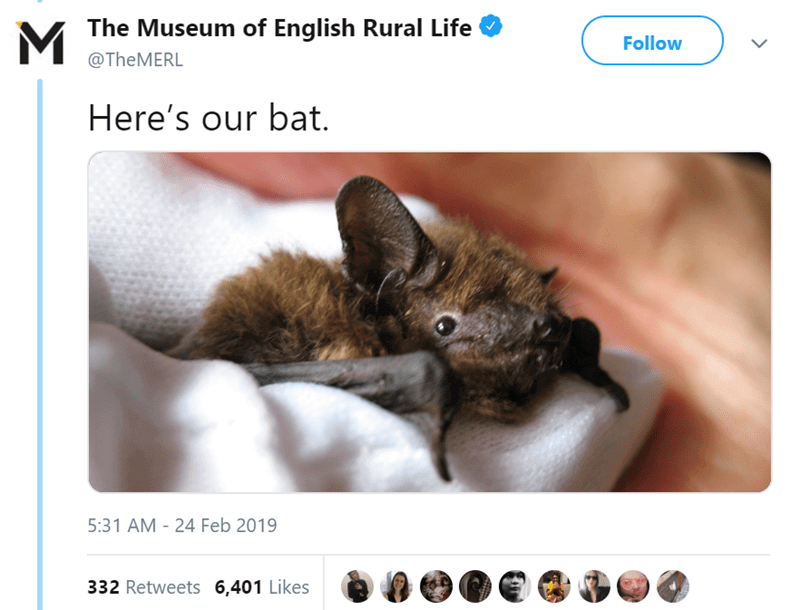 twitter-thread-bat-found-uk-library-museum-13.png