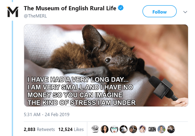 twitter-thread-bat-found-uk-library-museum-14.png