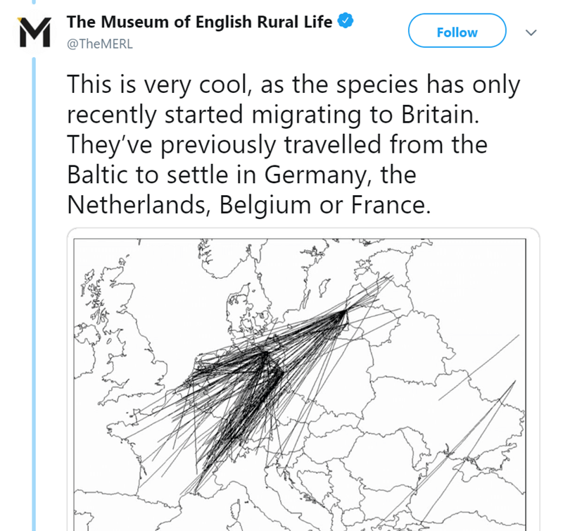 twitter-thread-bat-found-uk-library-museum-17.png