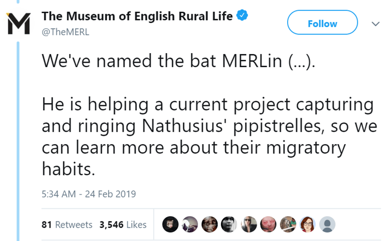 twitter-thread-bat-found-uk-library-museum-18.png