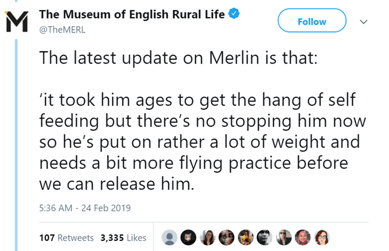 twitter-thread-bat-found-uk-library-museum-19.png