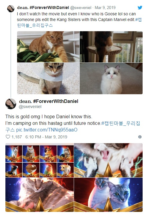 captain-marvels-cat-twitter-trend-6.jpg