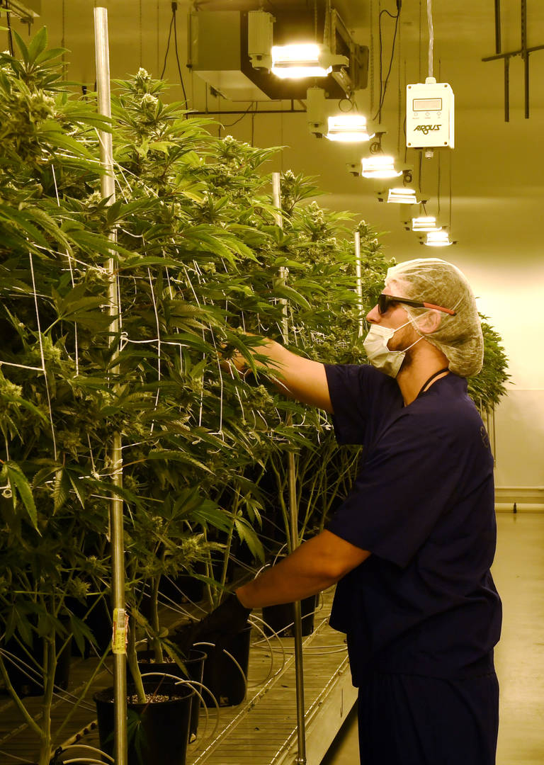 more-us-colleges-preparing-students-for-cannabis-industry-1.jpg