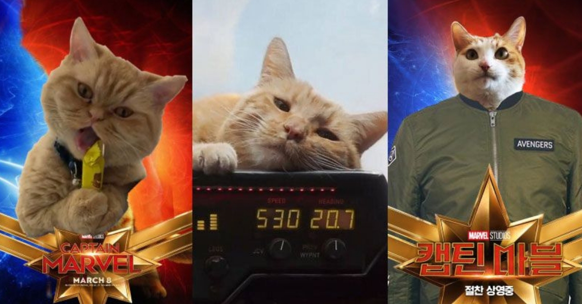 captain-marvels-cat-twitter-trend-cover