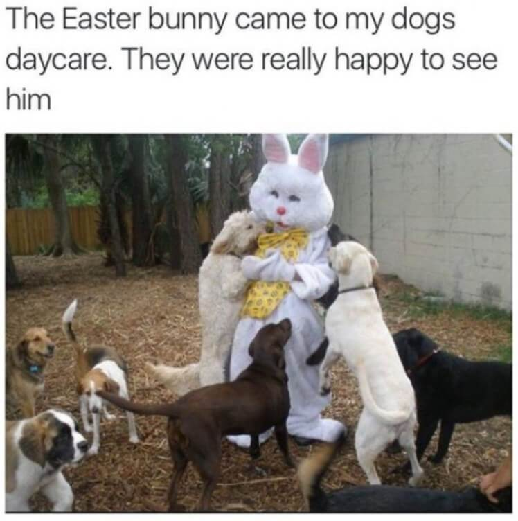 easter-memes-for-students-08