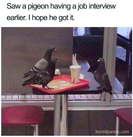 job-interview-memes-04
